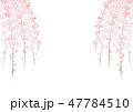 しだれ桜 花 桜のイラスト 47784510