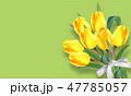 チューリップ チューリップ ベクターのイラスト 47785057