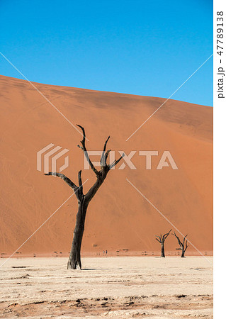 ナミビア ナミブ砂漠 死の沼デッドフレイ 47789138