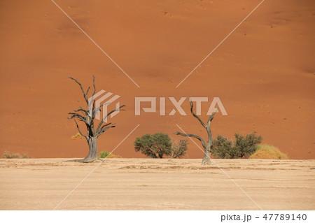 ナミビア ナミブ砂漠 死の沼デッドフレイ 47789140