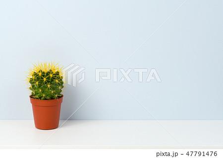 Cactus on white shelf 47791476