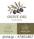 葉っぱ もくせい科 オリーブのイラスト 47801867