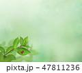 新緑 春 葉のイラスト 47811236
