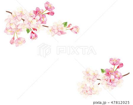 桜 水彩イラスト 47812025