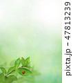 背景-新緑-グリーン-てんとう虫-春-夏-日差し 47813239