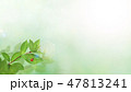 新緑 春 葉のイラスト 47813241