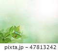 背景-新緑-グリーン-てんとう虫-春-夏-日差し 47813242