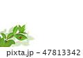 背景-新緑-グリーン-てんとう虫-春-夏-白バック 47813342