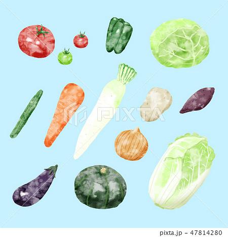 野菜イラスト 青 47814280