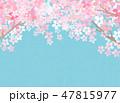 桜 和紙風 背景のイラスト 47815977