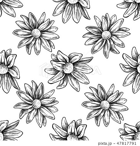 Seamless pattern with black and white chrysanths, primula 47817791