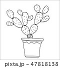 Cactus hand drawn style, isolate white background. 47818138