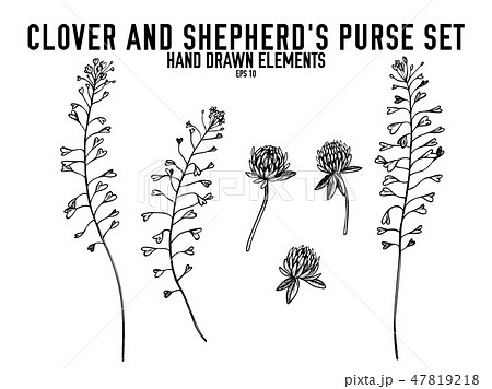 Vector collection of hand drawn black and white clover, shepherd's purse 47819218