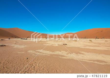 ナミビア ナミブ砂漠 死の沼 デッドフレイ 47821119