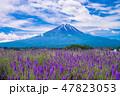 大石公園 ラベンダー 富士山の写真 47823053
