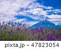 大石公園 ラベンダー 富士山の写真 47823054