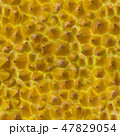 Durian Skin Seamless Background. King of Tropical Fruits Pattern. 47829054