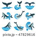 くじら クジラ 鯨のイラスト 47829616