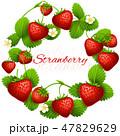 くだもの フルーツ 実のイラスト 47829629