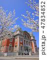 桜 山桜 春の写真 47834852
