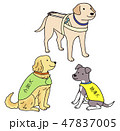 日本ユニバーサルマナーマナー協会監修素材 盲導犬と介助犬と聴導犬 47837005