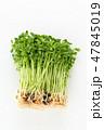 野菜 食材 豆苗の写真 47845019