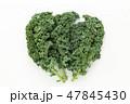 野菜 食材 ケールの写真 47845430