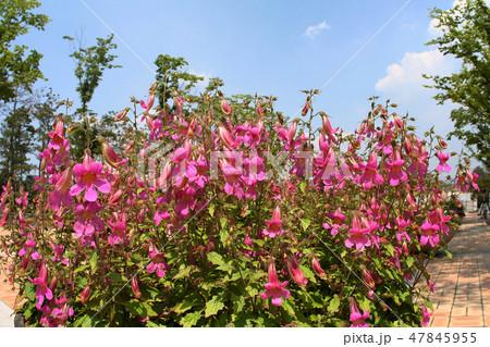 樹木園 夏の花 空 47845955