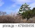 梅と名古屋城天守閣 47848456