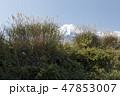 風景 農業 日本の写真 47853007