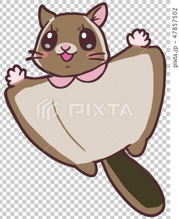 かわいいムササビ2 cute flying squirrel2 47857502