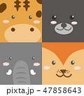 動物 顔 面のイラスト 47858643