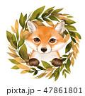 きつね キツネ 狐のイラスト 47861801