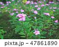 flower bed in the garden 47861890