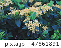 flower bed in the garden 47861891
