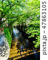 新緑 川 河川の写真 47863105