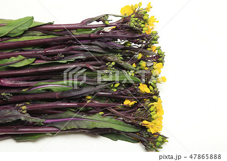 食材 紅菜花 ベニナバナ 47865888