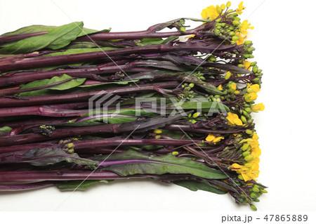 食材 紅菜花 ベニナバナ 47865889