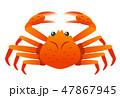 ズワイカニ 47867945