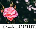 花 植物 お花の写真 47873355