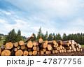 材木 ウッド 木の写真 47877756