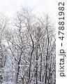 林 冬 積雪の写真 47881982