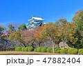 【愛知県】紅葉と名古屋城大天守 47882404
