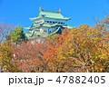 【愛知県】紅葉と名古屋城大天守 47882405