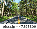 木々 虹の松原 道の写真 47898809
