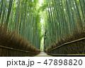 京都 新緑の竹林 47898820