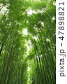 竹 竹林 新緑の写真 47898821