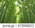 竹 竹林 新緑の写真 47898822