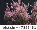 小花 花 桃色の写真 47899431