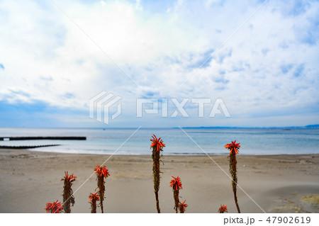 アロエと海岸 47902619